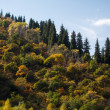 Autumn in the Mountains — Stock Photo #35373217