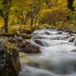 Mountain river rapids in autumn — Foto de Stock