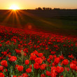 Sunset over field with Red poppies — Stock Photo