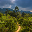The road to the jungle — Stock Photo