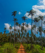 Road through the palm forest — Stock Photo