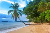 Vackra tropiska stranden — Stockfoto