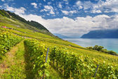 Lake Geneva with vineyards — Stock Photo