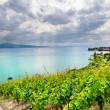 Famouse vineyards in Geneva lake - Stock Photo