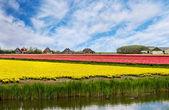 Våren landskap i holland — Stockfoto