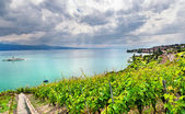 Famouse vineyards in Geneva lake — Stock Photo
