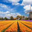 Dutch landscape - Stock Photo