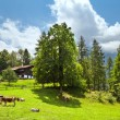 traditional swiss farm house — Stock Photo