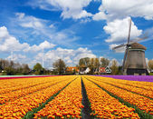 Dutch landscape — Stock Photo