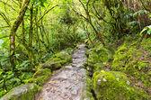 Rainforest in Ecuador — Stock Photo