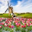 Holland — Stock Photo #27330265