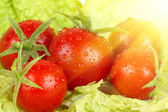 Tomatoes on the salad leaves — Stock Photo