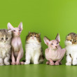 Five kittens of different breeds. — Stock Photo