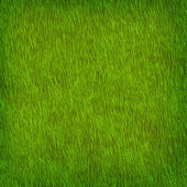 Green grass texture — Vector de stock