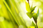 Fresh And Green Leaves — Stock Photo