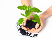 Small plant cupped in child's hands — Stock Photo