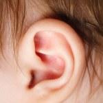 Ear — Stock Photo #2597084
