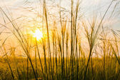 Sunset behind grains — Stock Photo