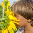 Stock Photo: Boy sniffing sunflower