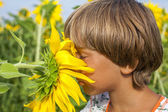 Boy sniffing sunflower — Stock Photo