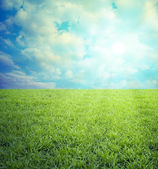 Field of grass,blue sky — Stock Photo