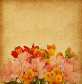 Old paper with alstroemeria — Stockfoto