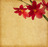 Vintage paper with red orchid — Stock Photo