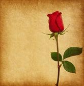 带着玫瑰的旧纸张纹理。 — 图库照片