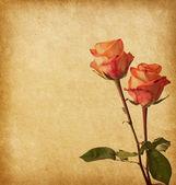 2 つのバラ — ストック写真