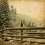 Landscape in the carpathians mountains — Stock Photo #36294561