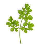 Parsley isolated on a white background — Stock Photo