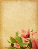Beige paper background with lilies. — Stock fotografie