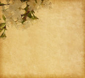Paper background with cherry blossom — Stock Photo