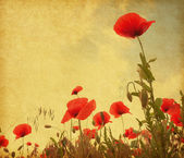 Field with poppies. — Stock Photo