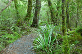 Temperate rain forest — Stock Photo