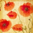 Red poppies — Stock Photo #41305139