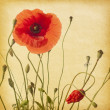 Red poppies — Stock Photo #41305427