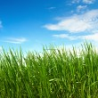 Green grass — Stock Photo #41306105