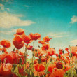 Grunge paper with poppy field — Stockfoto
