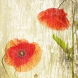 Red poppies — Stock Photo #41308949