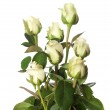 Bouquet of pale roses — Stock Photo