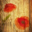 Red poppies — Stock Photo #41309425