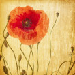 Red poppies — Stock Photo #41309475