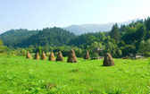 Beautiful summer day  in the Carpathian Mountains  — Stock Photo