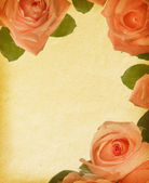 Old paper textures with roses — Stockfoto
