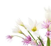 Flores secas e lírios brancos — Foto Stock