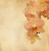 Vintage paper with orchid — Stock Photo