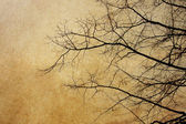 Paper textures with branches — Stock Photo