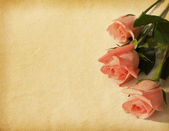 Old paper textures with three pink roses — 图库照片