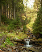 Woodland Stream — Foto de Stock